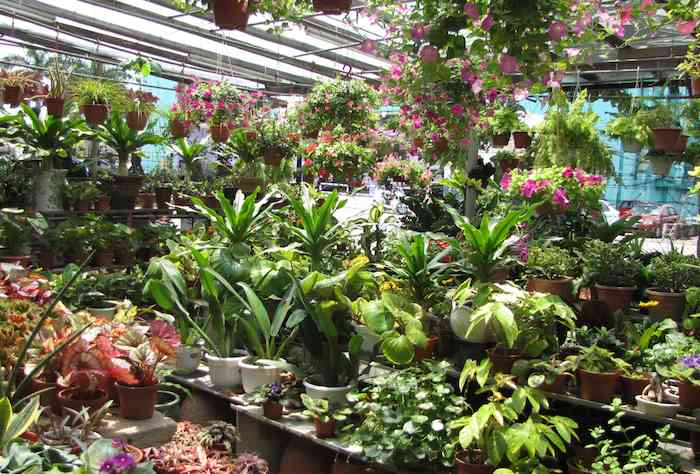 photo of the plants inside the nursery