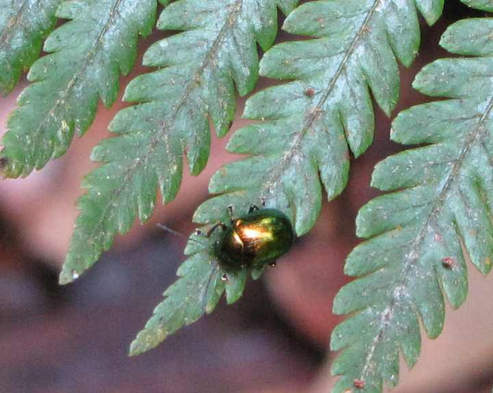 photo of a shiny beetle on the Pine tree trail