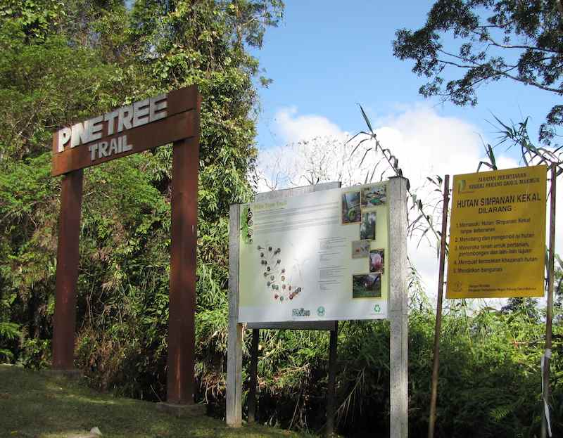 photo of the pine tree trailhead