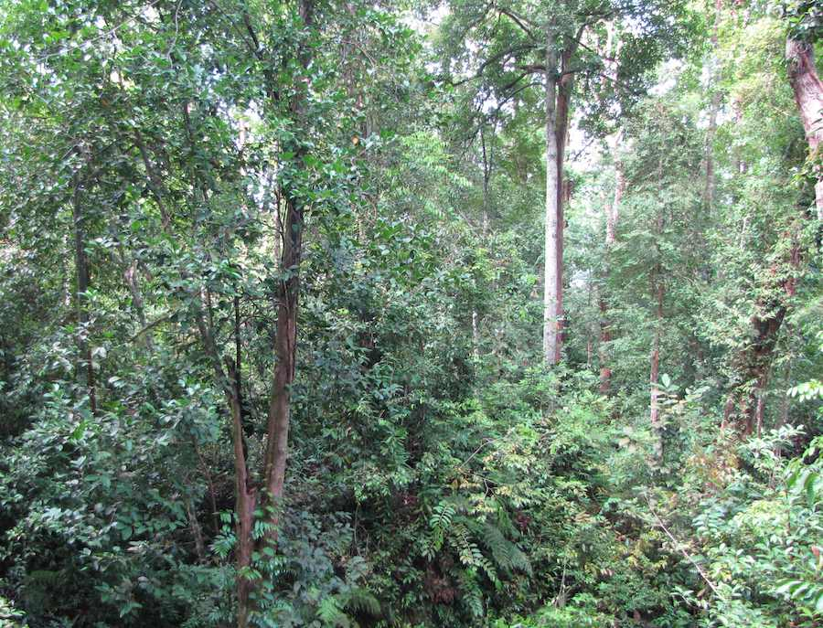 photo of the forest on the Lintang trail