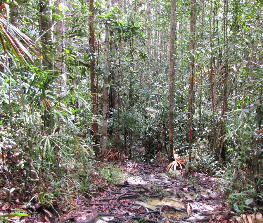 Forest trail, Lintang trail