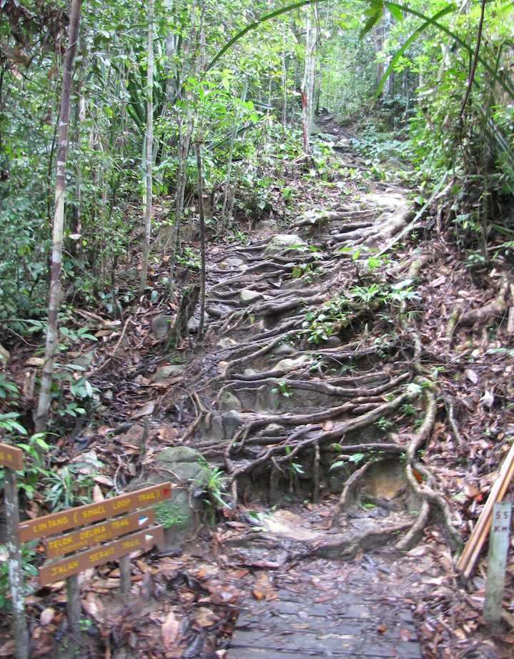 Steep climb on trail, Lintang trail