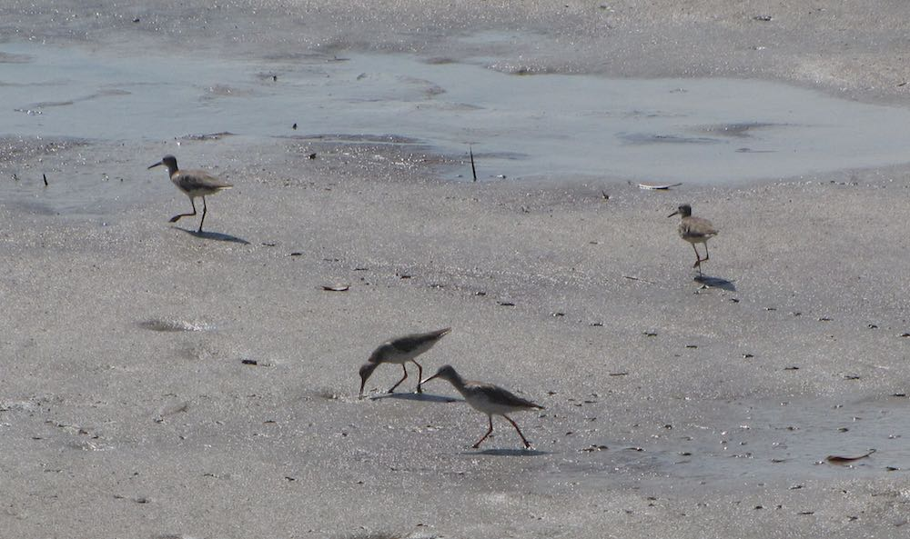 4 birds on the beach