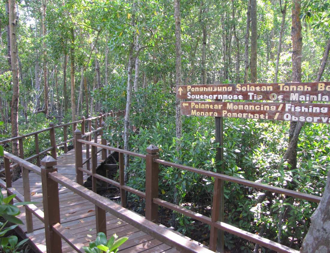 raised walkway in the mangrove forest