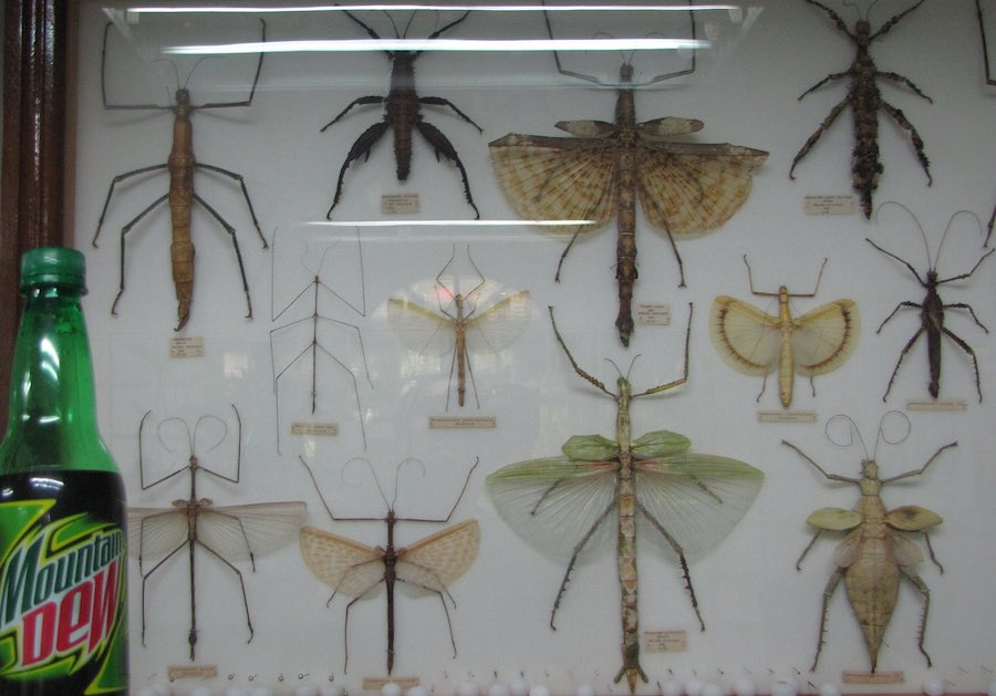 display or large, dead, bugs